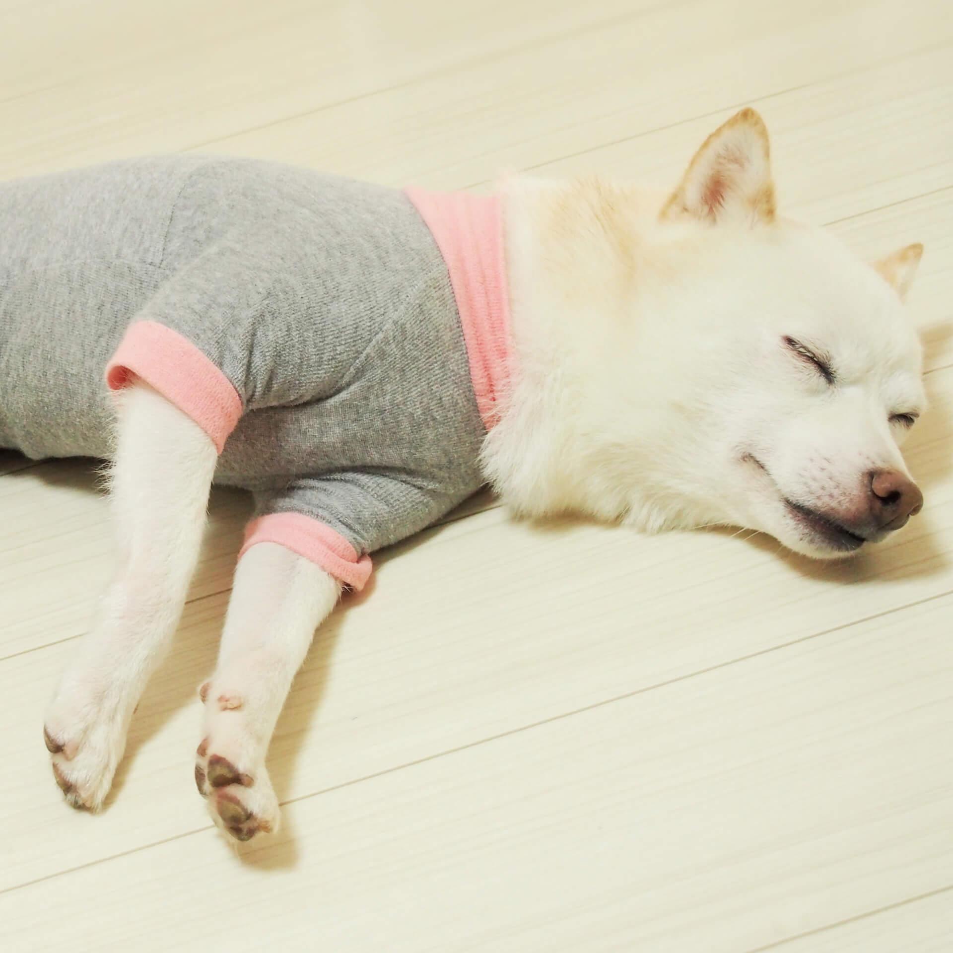 犬服を着て寝る愛犬イメージ